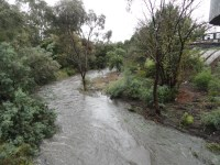 Merri Creek upstream from Blyth St on 2 12 17