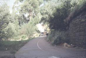 Path under Heidleberg Road bridge, Clifton Hill 1996