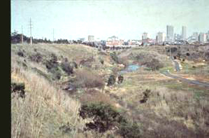 Yarra Bend parklands, Clifton Hill 1982