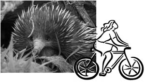 echidna and bike rider