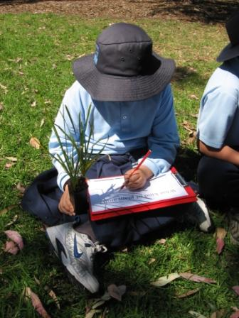 A student doing botanic drawing of an indigenous plant